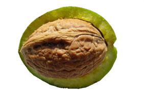 Brou de la noix