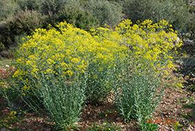 Ces plantes qui tueraient le cancer for Plante 150 maladies madagascar