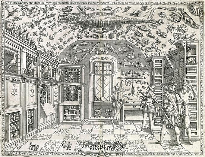 La première représentation d'un cabinet de curiosités - Gravure de Ferrante Imperato s ' Dell'Historia Naturale (Naples 1599) - Crédit Wikimédia