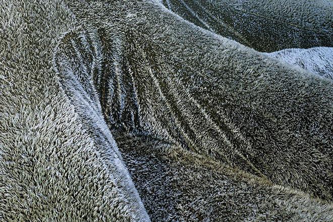 La texture du revêtement de l'Aster Papposus, comme une véritable étoile de mer