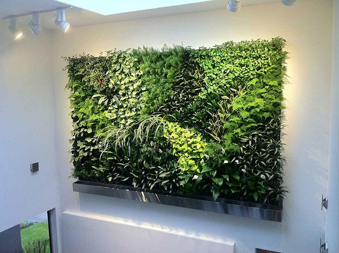 Mur végétal installé chez un particulier à Boulogne Billancourt (92) - © nicolaspaysagiste.fr