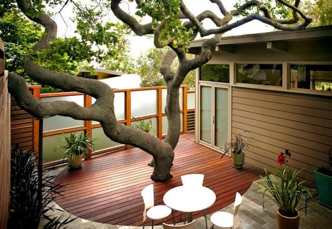 construire tout en pr servant les arbres terre meuble. Black Bedroom Furniture Sets. Home Design Ideas